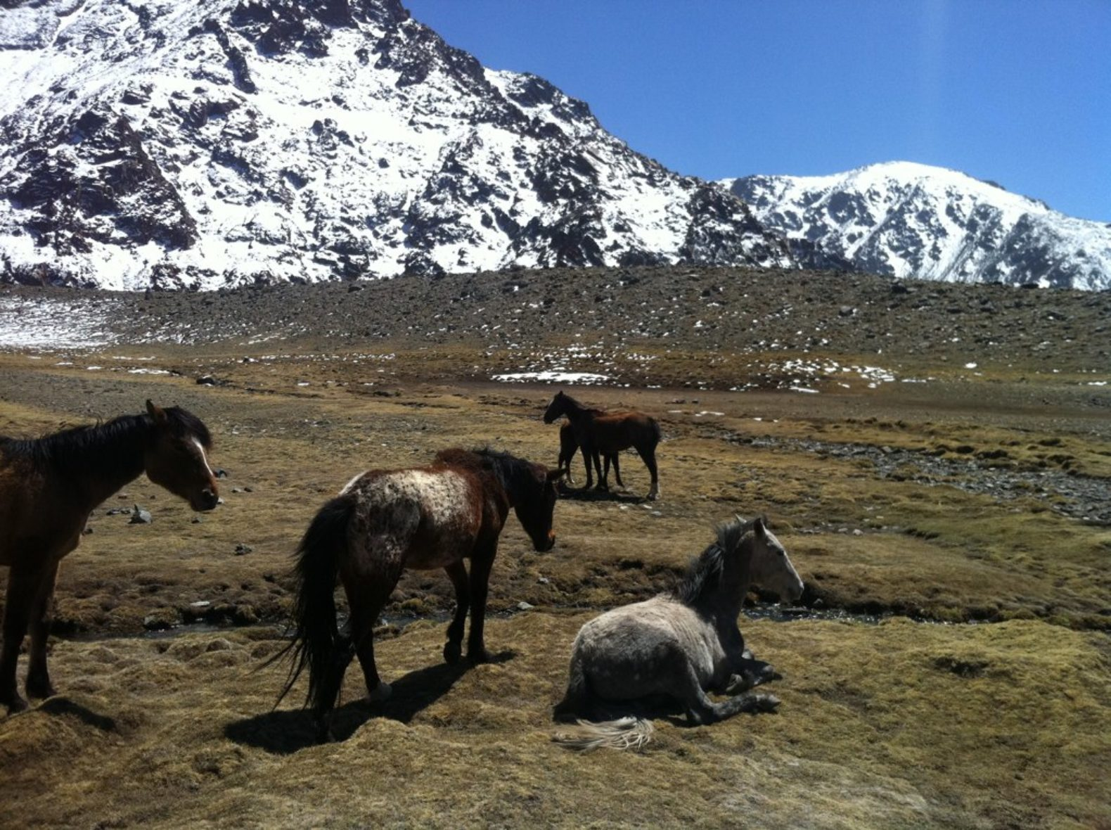 horses-nature-snow-mountains-wildlife-entre-cielos-hamam-spa-argentina