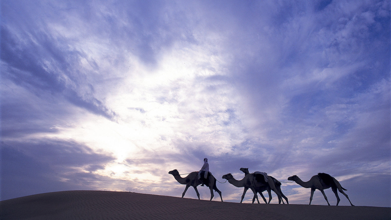 camel-ride-adventure-al-maha-resort-hotel-dubai