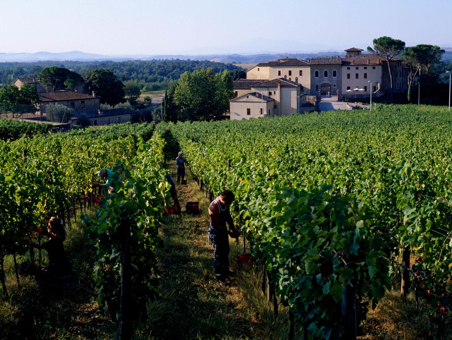 outdoor-nature-vineyard-castel-monastero-spa-retreat-italy