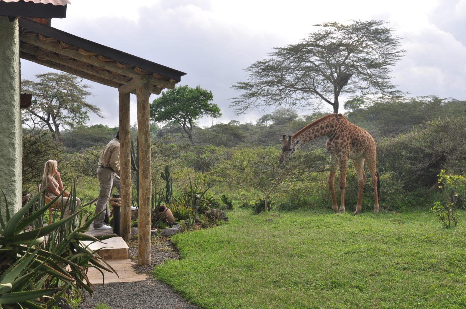 Hatari-Garten-mit-Giraffe.jpg
