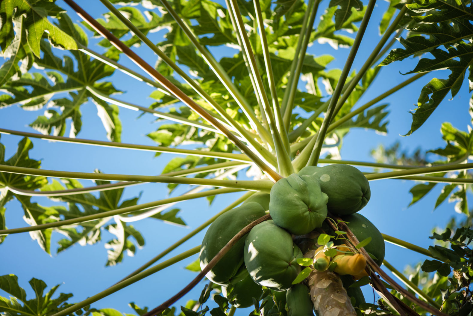 fresh-coconut-tree-juice-buchinger-wilhelmi-marbella-spain
