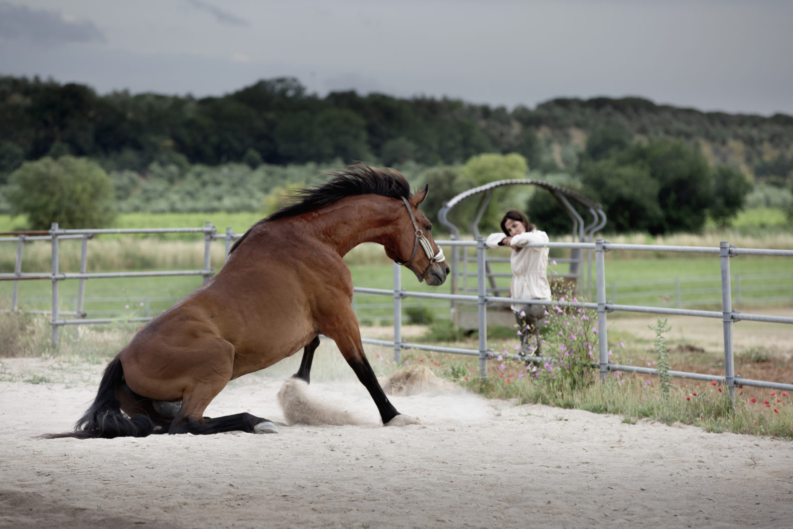 horse-therapy-equine-guided-education-healing-dojo-bianco-tuscany-italy