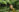 Healing Sanctuary - Chlorophyll Body Wrap