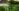 waterlilys-green-nature-rack